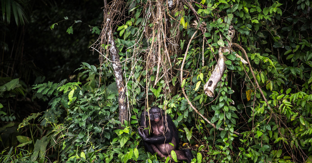 Animal Viruses Are Jumping to Humans. Forest Loss Makes It Easier.
